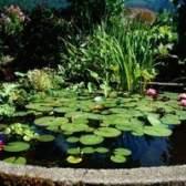 As vantagens e desvantagens de uma lagoa solares