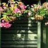 As melhores flores para pendurar plantas