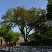 Os melhores árvores de sombra para o sudeste