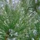 As melhores árvores para plantar em solo argiloso