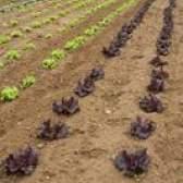 Os melhores vegetais para crescer em wisconsin
