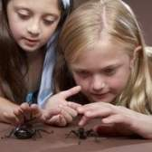 As melhores maneiras de se livrar das aranhas casa comum que são seguros para animais de estimação