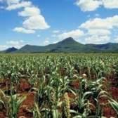 Os efeitos da evaporação sobre a produção agrícola
