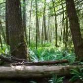 Árvores da floresta tropical africano
