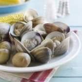 Tipos de moluscos comestíveis