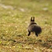 Usando sons de alta frequência que só os animais podem ouvir para manter esquilos longe