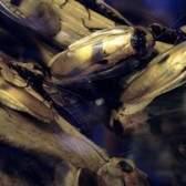 Riscos tenda de fumigação vikane