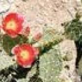 Quais são as plantas do deserto?