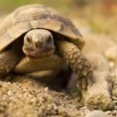 O que tartarugas comer?