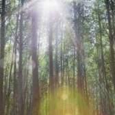O que as plantas vivem na floresta temperada?