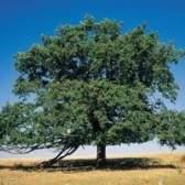 O que as árvores absorvem o dióxido de carbono mais?
