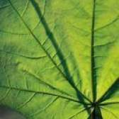 Quais órgãos ou partes da planta estão envolvidos na transpiração?