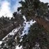 Os melhores árvores perenes de rápido crescimento
