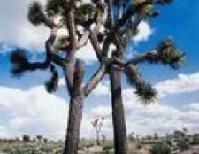 10 Organismos que vivem no bioma deserto