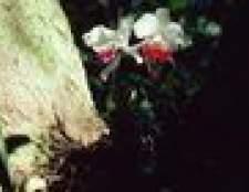 Há algum plantas barberry que são sombra de amor?