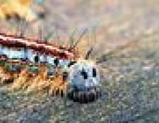 Diferentes tipos de lagartas distorcido