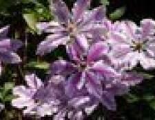 Lista de escalada flores e plantas