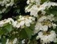 Flores e plantas que fazem bem no frio e calor