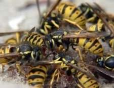 Insetos voadores que se parecem com vespas