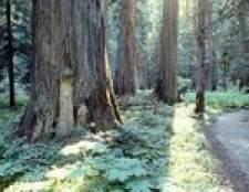 Riscos para a saúde de tábuas de cedro assar