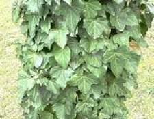 Home remédio para matar plantas hera venenosa