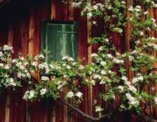 Cores da casa que complementam redwood