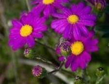 Como flores atraem polinizadores?
