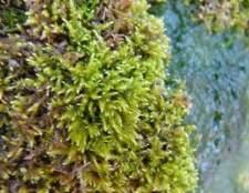 Como eu mato verde musgo no meu telhado?