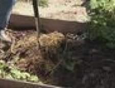 Como faço para organicamente se livrar de insetos no solo de uma planta da casa?