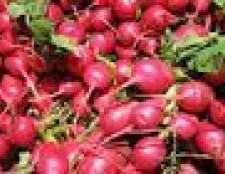 Quanta água que é preciso para crescer sementes de rabanete?