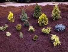 Como devo fertilizar o meu solo do jardim antes de plantar?