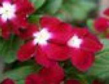 Como organizar as flores em um plantador