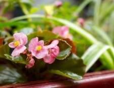 Como anexar caixas de flores para uma casa com revestimento de vinil
