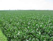 Como calcular sementes de soja por acre