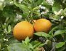 Como cuidar de laranjeiras no Arizona