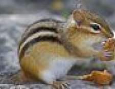 Como a perseguir esquilos afastado com óleo de hortelã