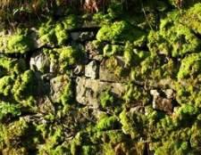 Como limpar o musgo fora de uma parede de pedra