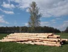 Como cortar pinheiros para casa de madeira