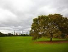 Como radicular profundo fertilizar uma árvore