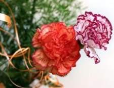 Como tingir flores usando corante alimentar
