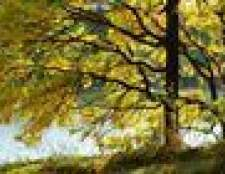Como explicar as quatro estações da primavera, verão, outono e inverno para uma criança