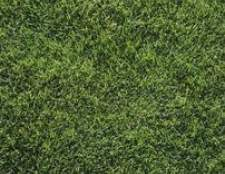 Como corrigir um gramado duro seco