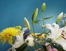 Como chegar botões de flores para abrir em flores frescas