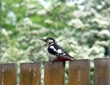 Como se livrar das aves irritantes no quintal