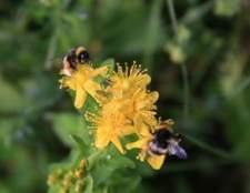 Como se livrar das abelhas no quintal