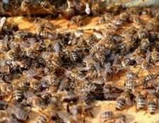Como se livrar das abelhas sem matá-los