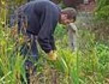 Como se livrar das ervas daninhas da cabeça da cabra
