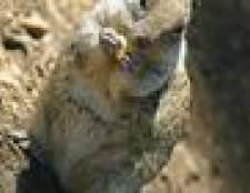 Como se livrar de novos esquilos méxico