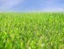 Como se livrar das ervas daninhas e crescer grama