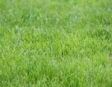 Como crescer grama na lama
